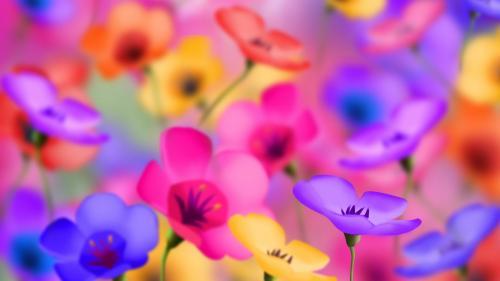 Ferns & Petals
